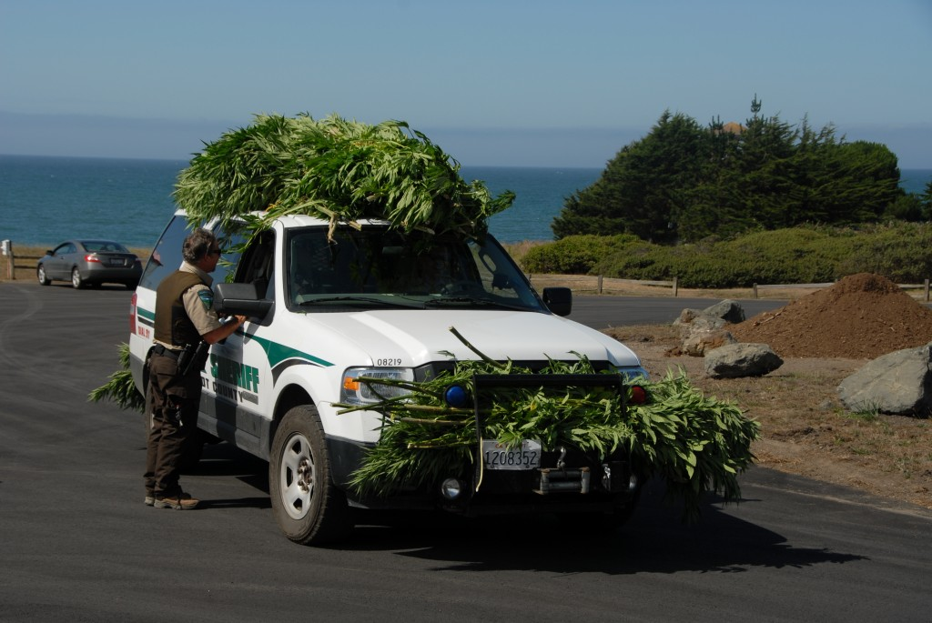Sheriff's vehicle with pot plants.
