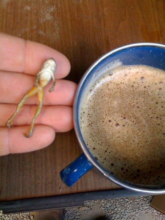 Frog in espresso